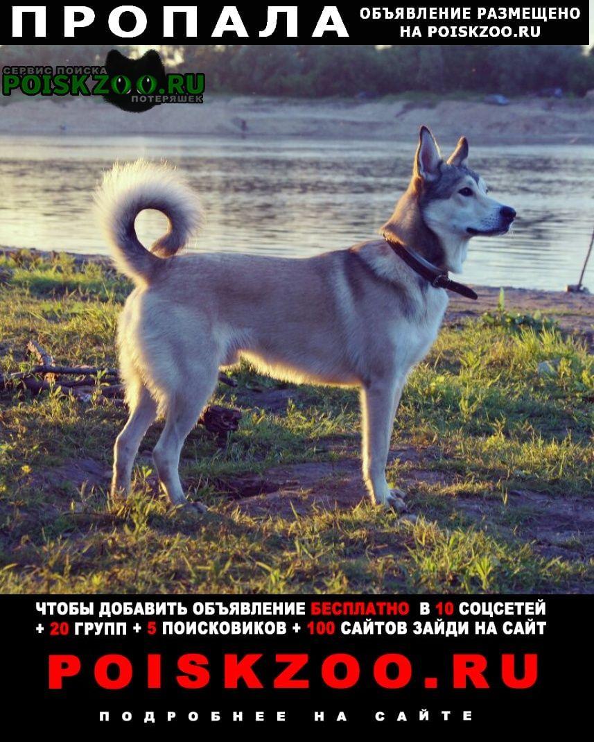 Пропала собака кобель пос.литвиново Фрязино