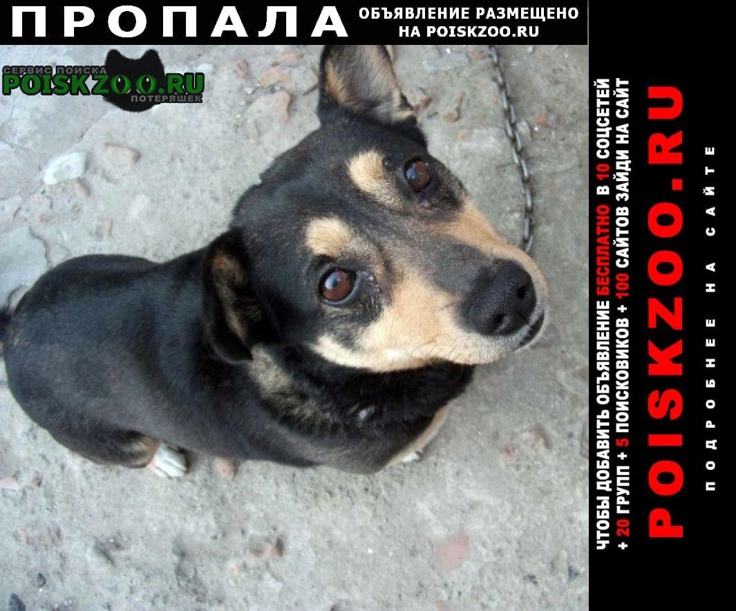 Пропала собака исчез старый друг Сальск