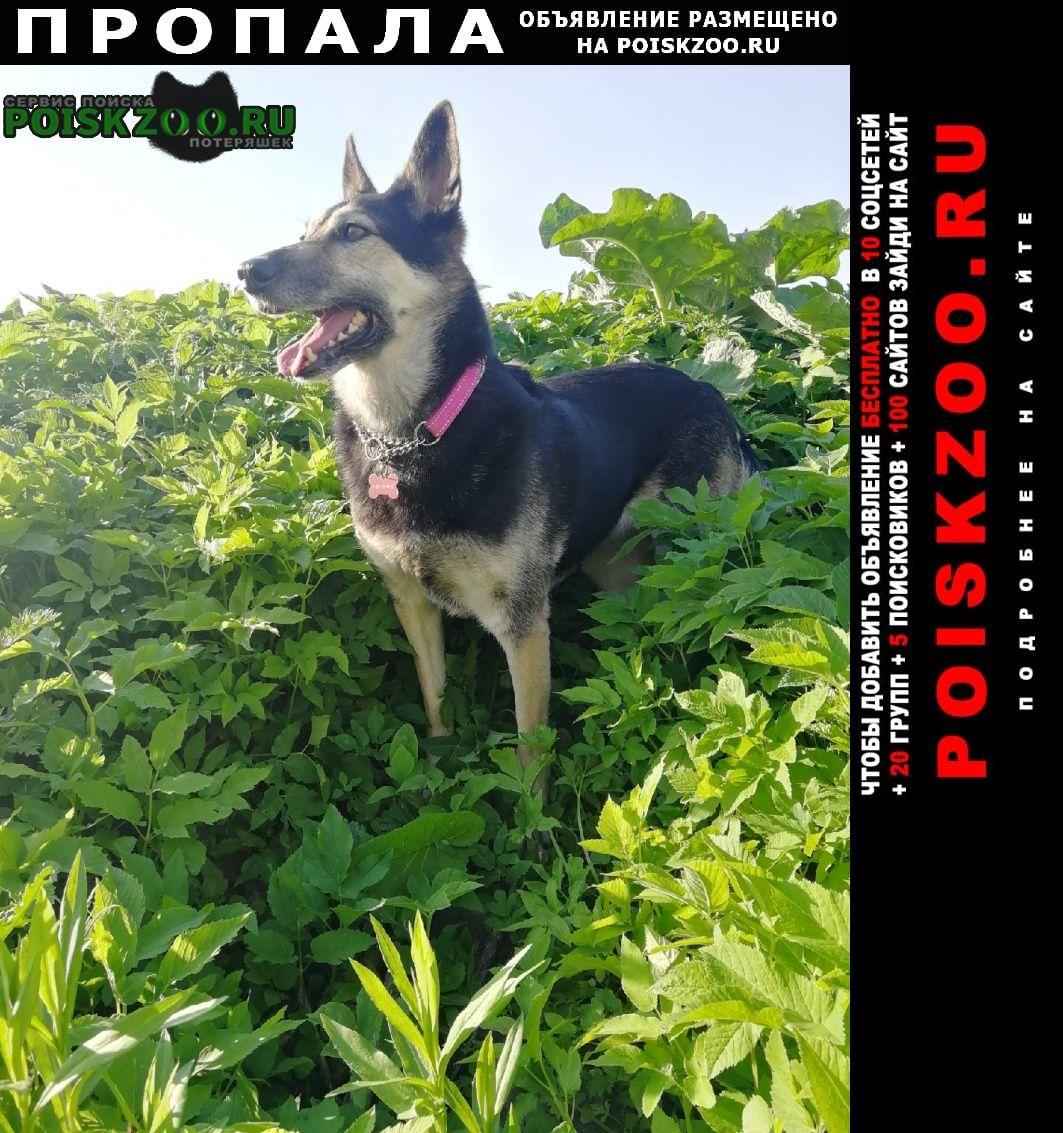 Пропала собака больше года ищем собаку Санкт-Петербург