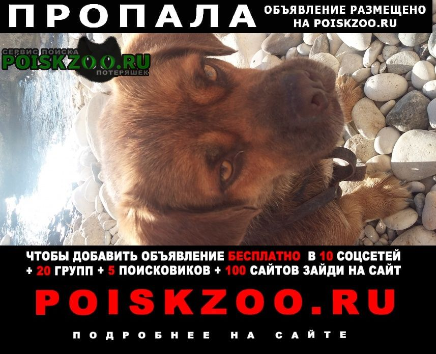 Севастополь Пропала собака кастрирован.очень добрый и доверчивый