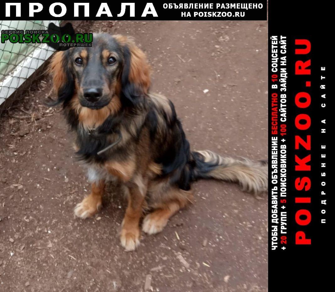 Пропала собака кобель Братск