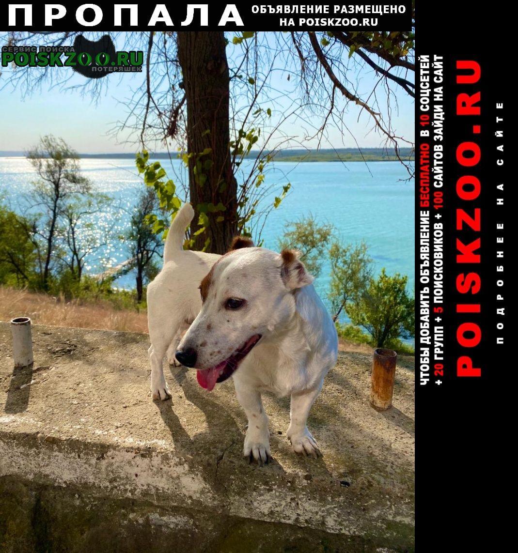 Пропала собака джек рассел терьер Москва