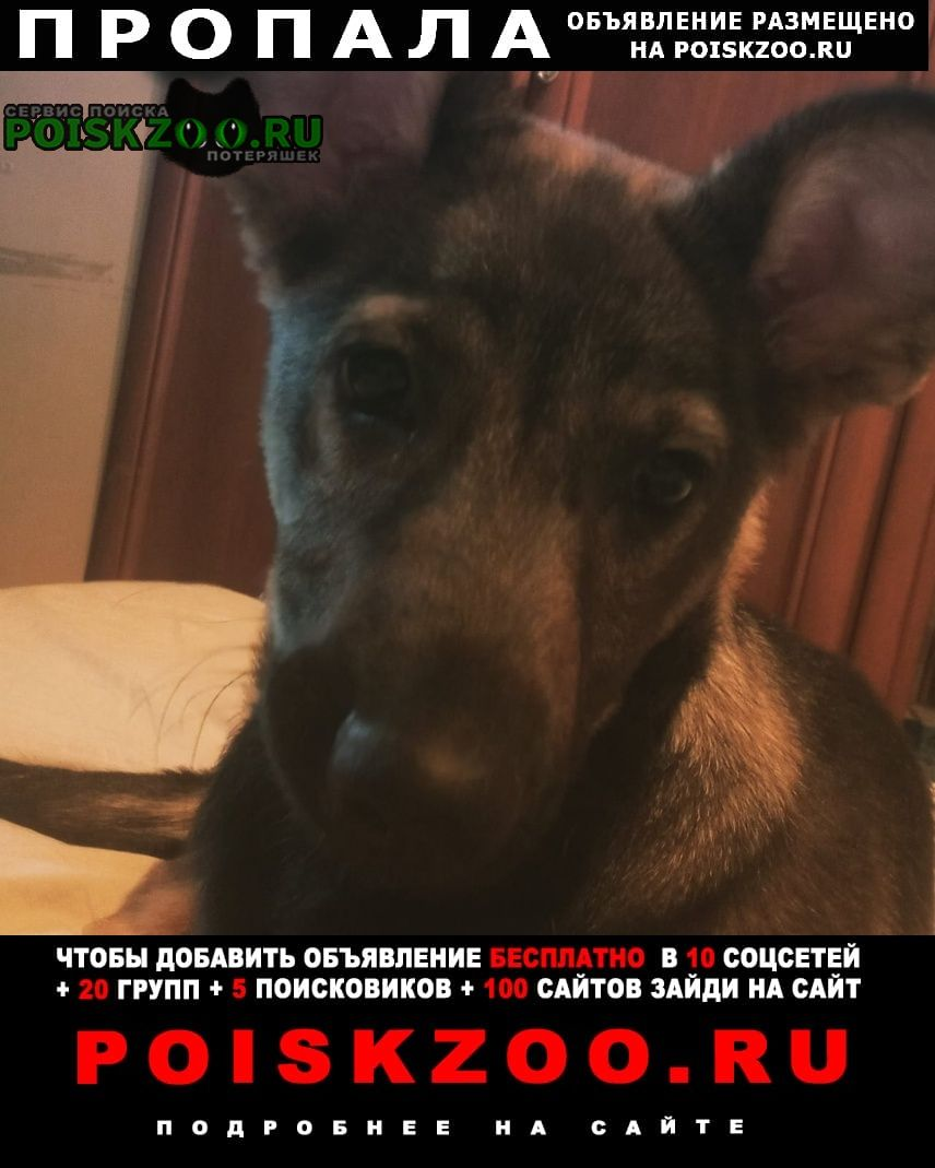 Харьков Пропала собака 22 марта гера