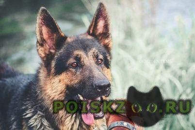 Пропала собака кобель г.Курск