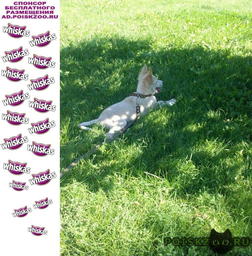 Пропала собака украли собаку г.Оренбург