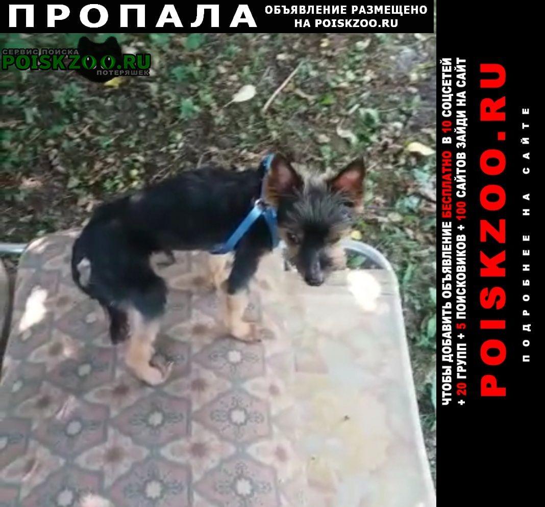 Пропала собака кобель Истра