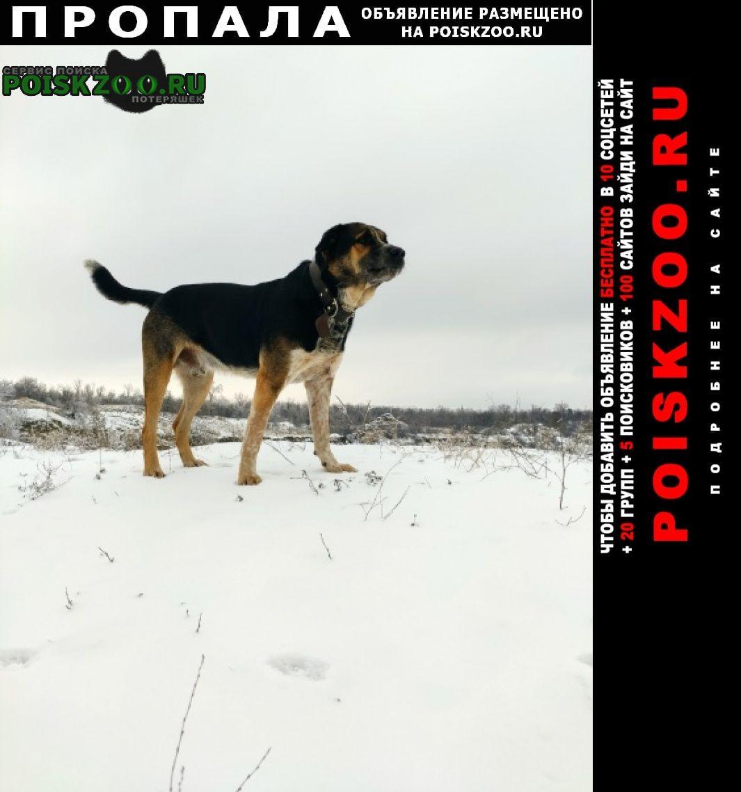 Пропала собака кобель Красный Сулин