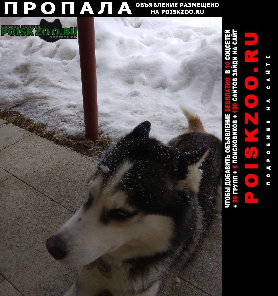 Пропала собака кобель Солнечногорск