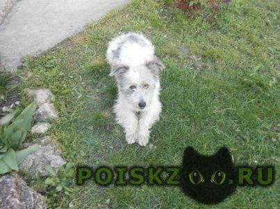 Пропала собака кобель г.Анапа