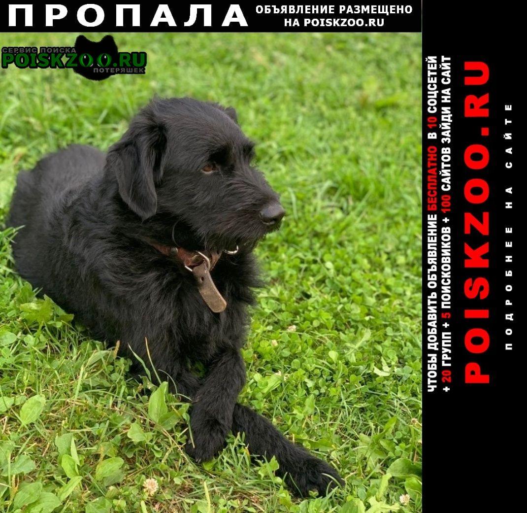 Пропала собака рич Москва