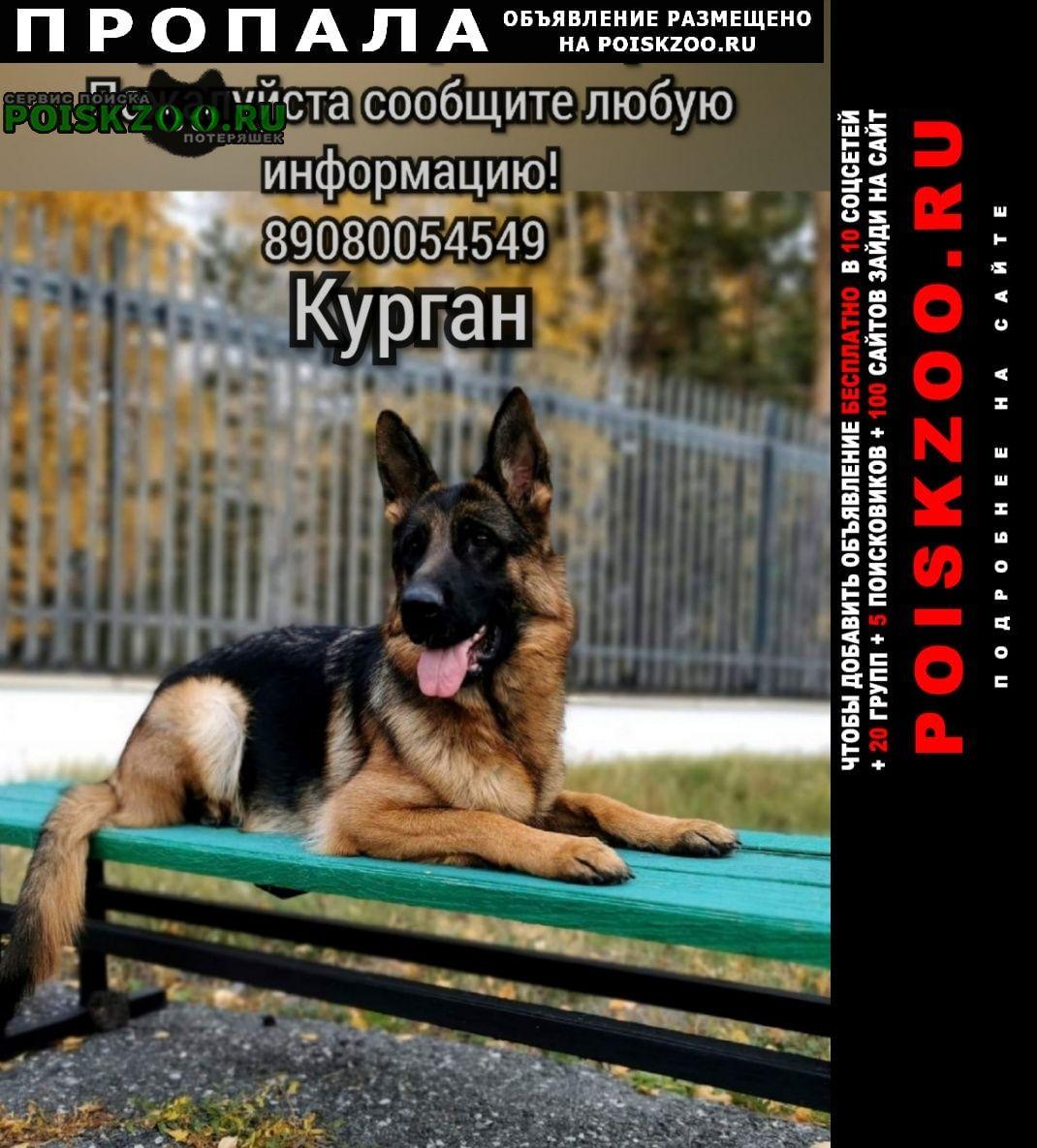 Курган Пропала собака вознаграждение
