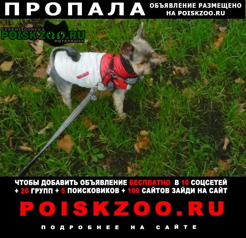 Пропала собака до сих пор ищем и ждем дома Москва