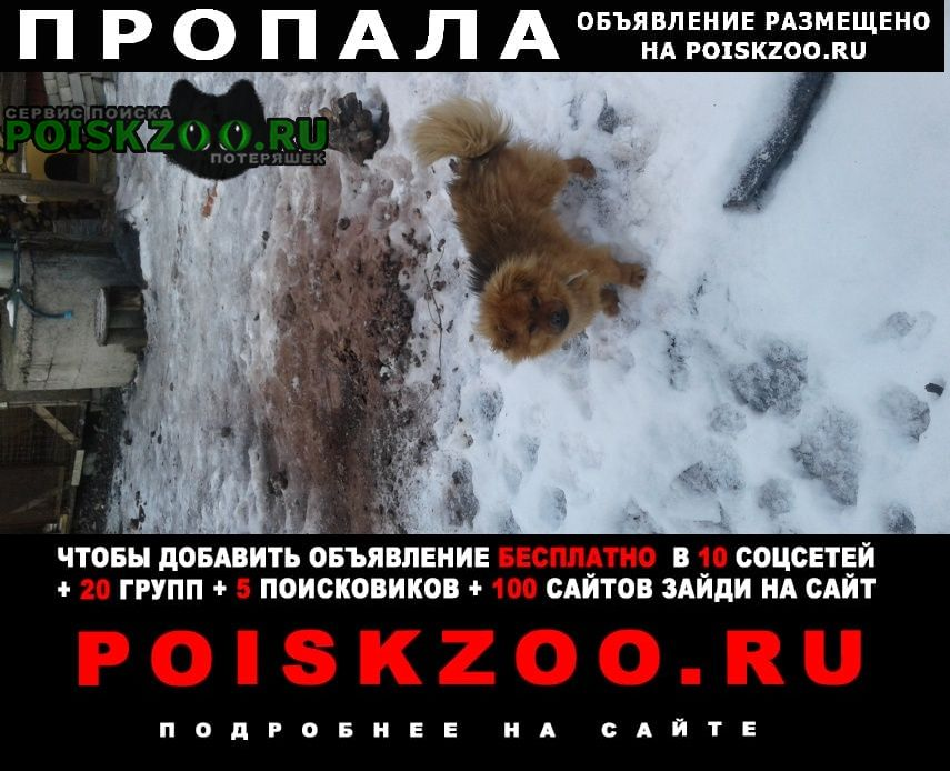 Пропала собака кобель Старый Оскол