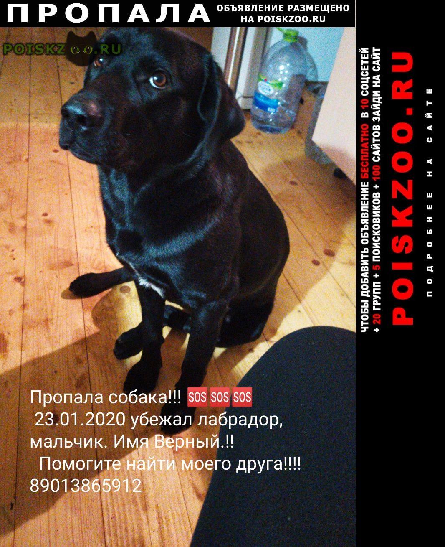 Пропала собака кобель г.Лесной Городок