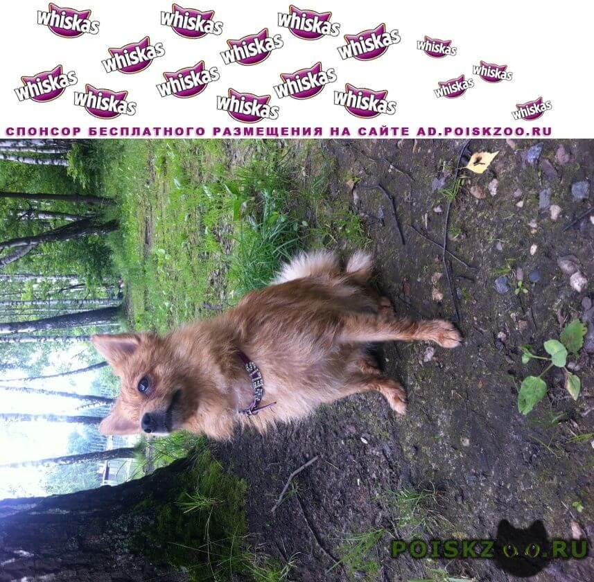 Пропала собака элис г.Климовск