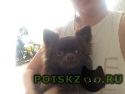Пропала собака кобель г.Смоленск