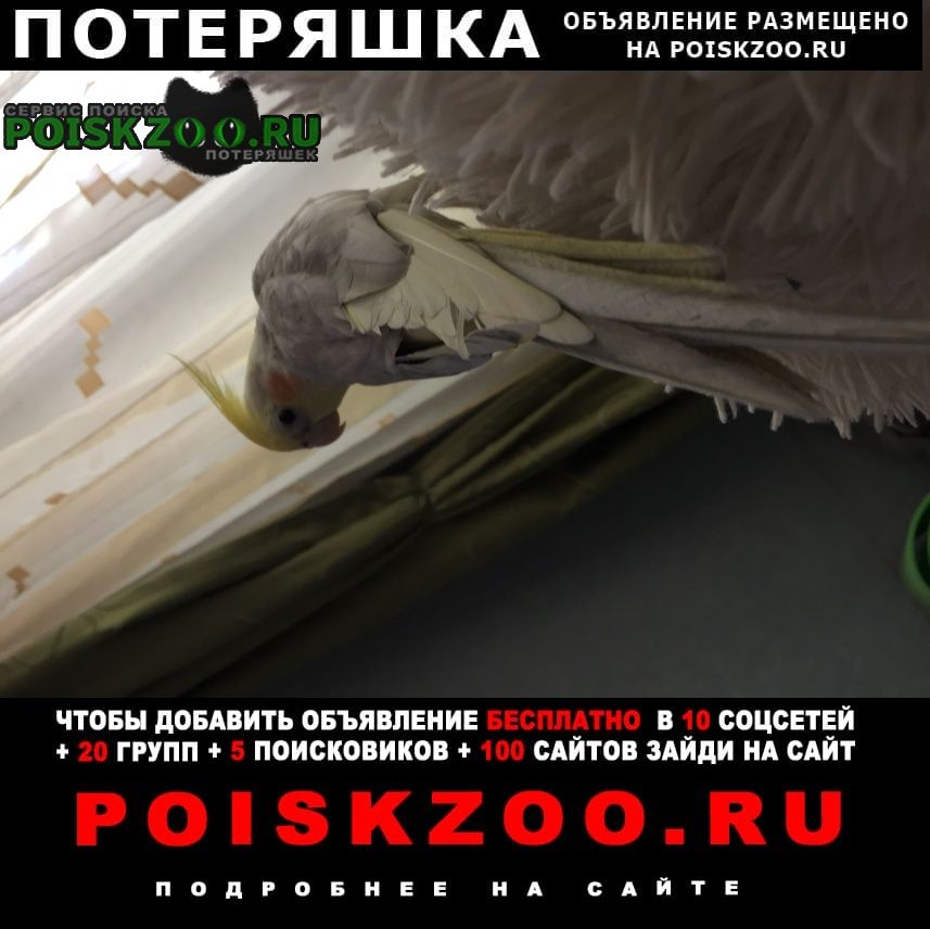 Пропал попугай г.Москва