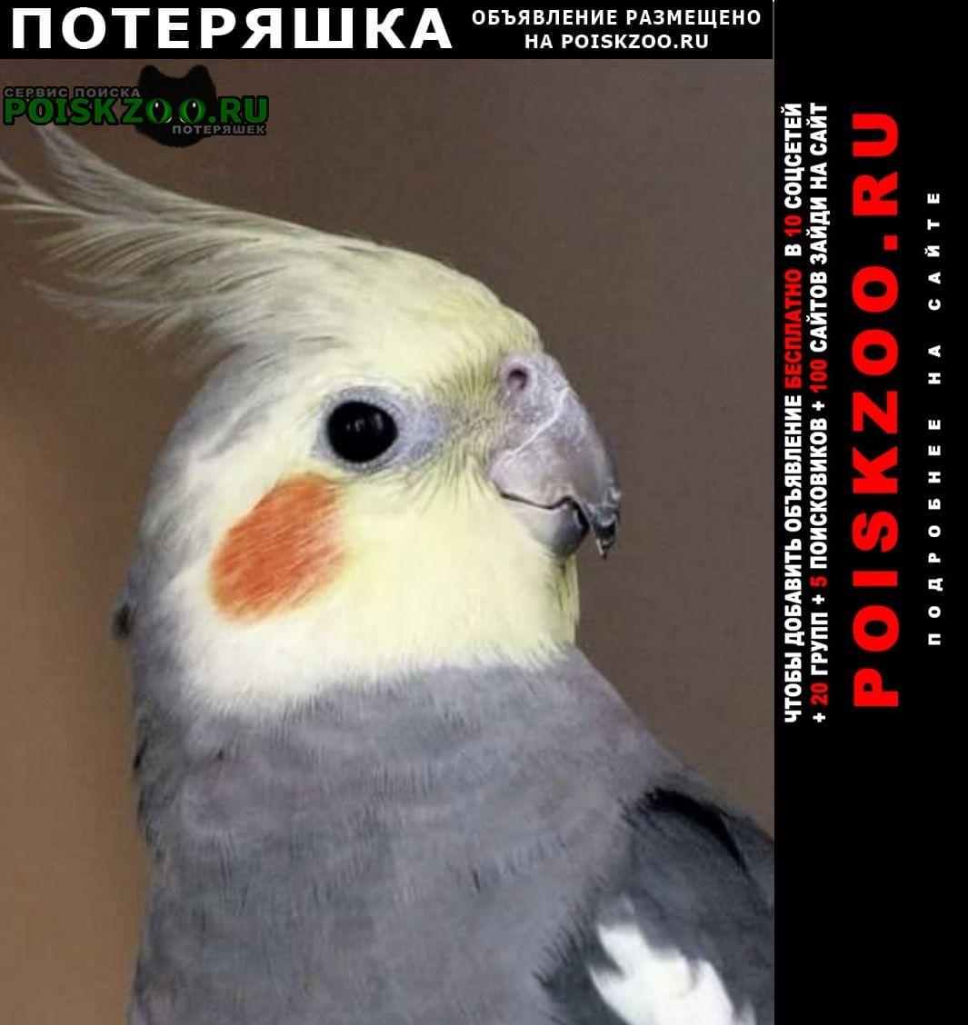 Пропал попугай корелла Москва