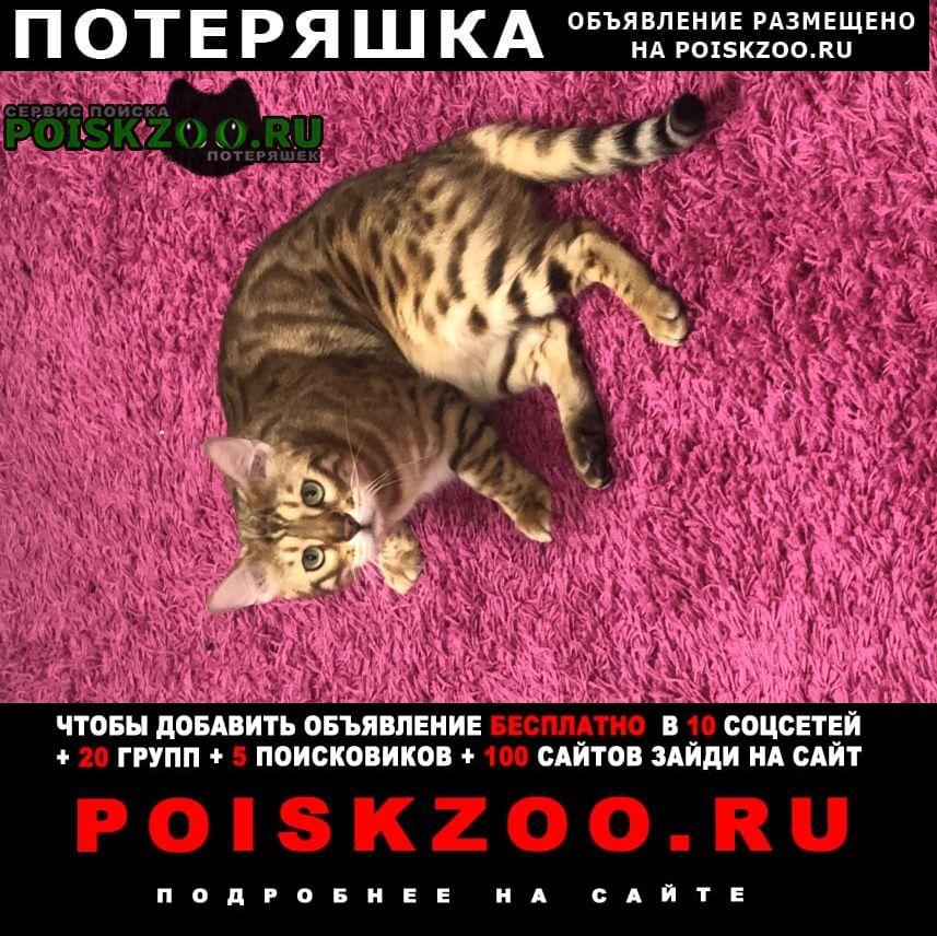 Пропало домашнее животное Дедовск