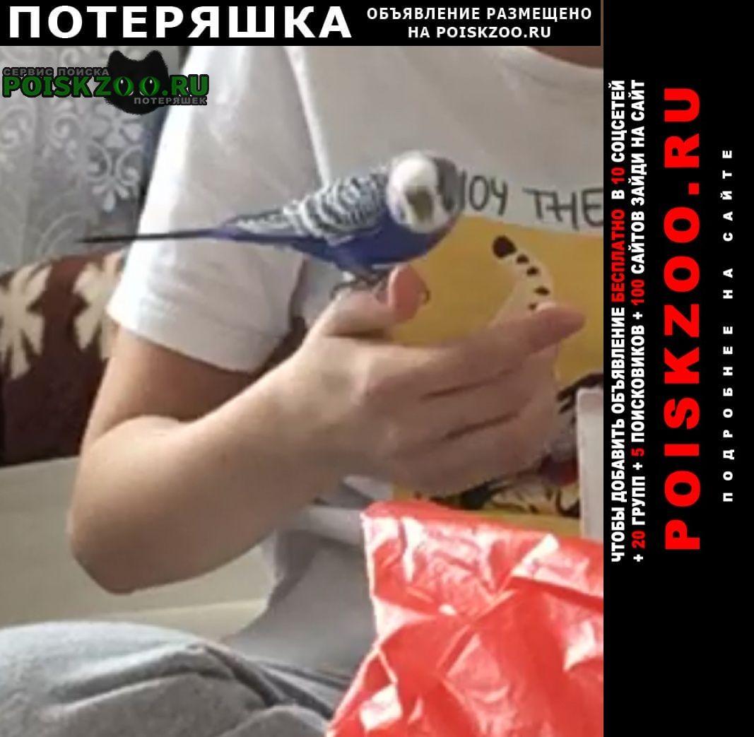 Оренбург Пропал попугай волнистый