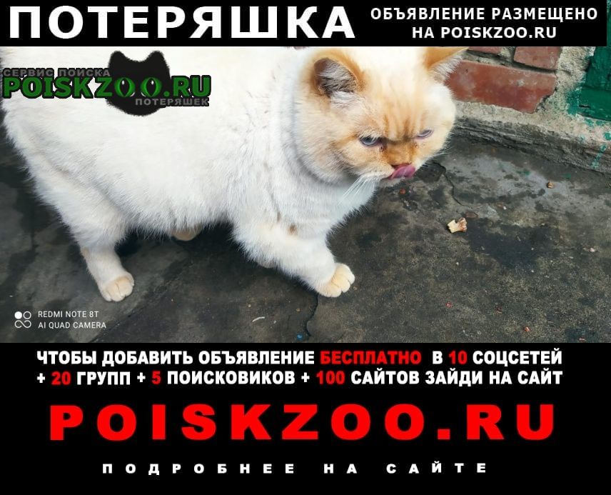 Пятигорск Пропало домашнее животное