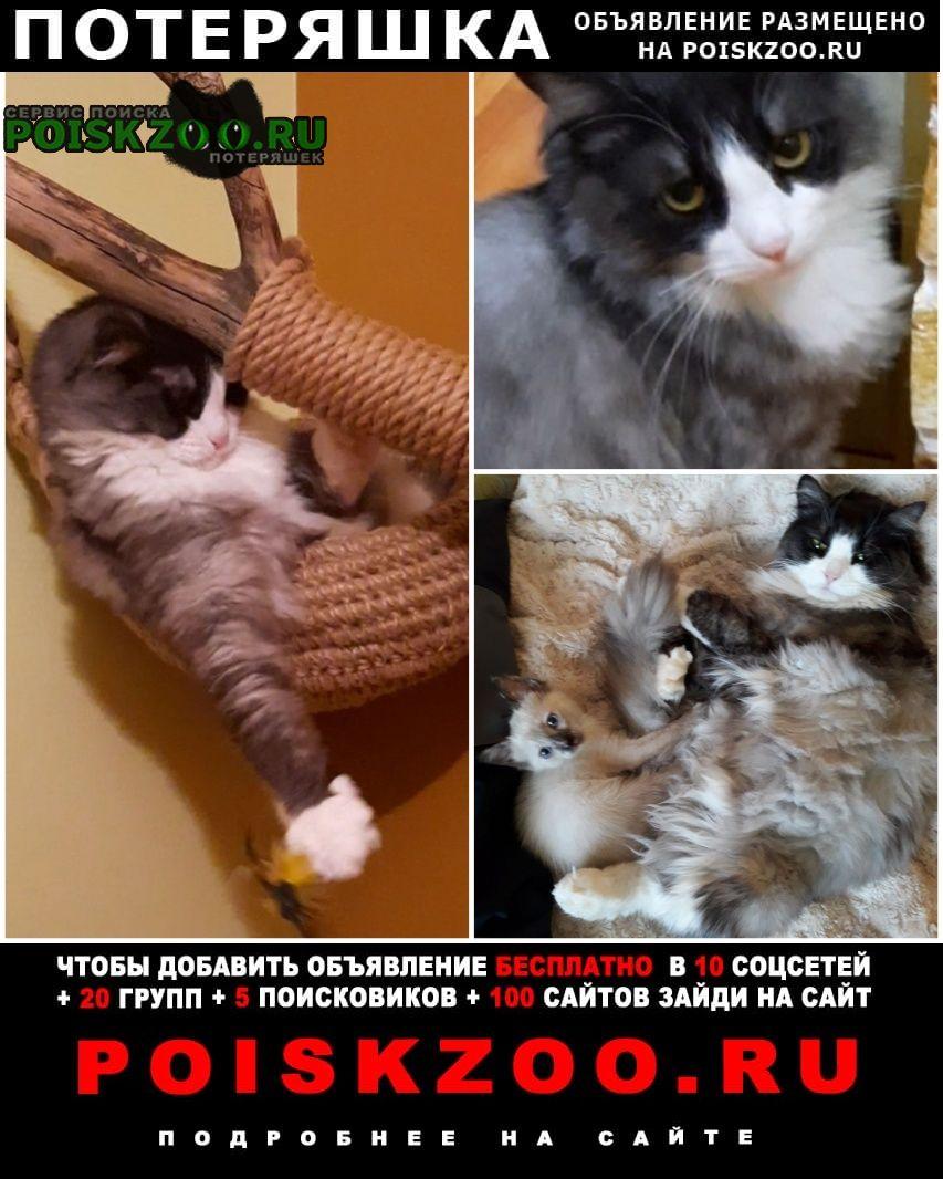 Пропало домашнее животное кот Тольятти