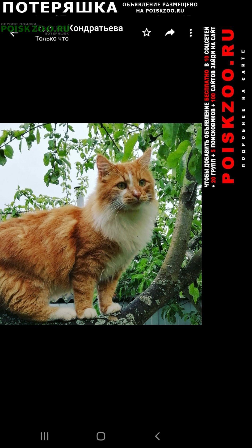 Пропало домашнее животное кот Клин