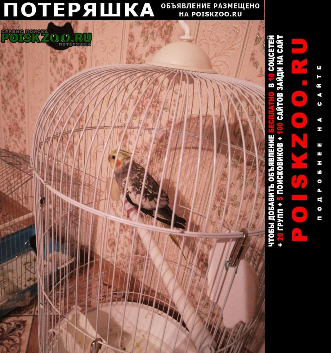 Пропал попугай улетел корелла в щербинках Нижний Новгород