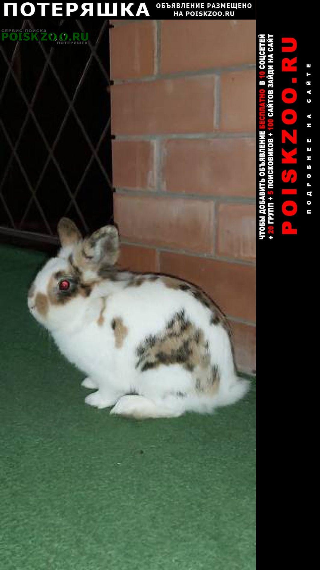 Пропало домашнее животное кролик декоративный Ейск
