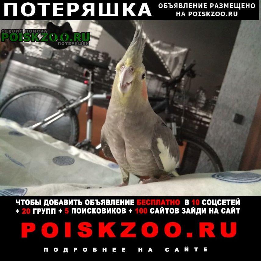 Пропал попугай Минск