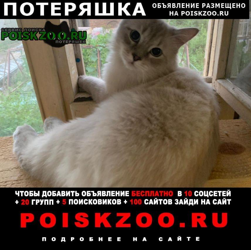 Пропал кот Загорянский