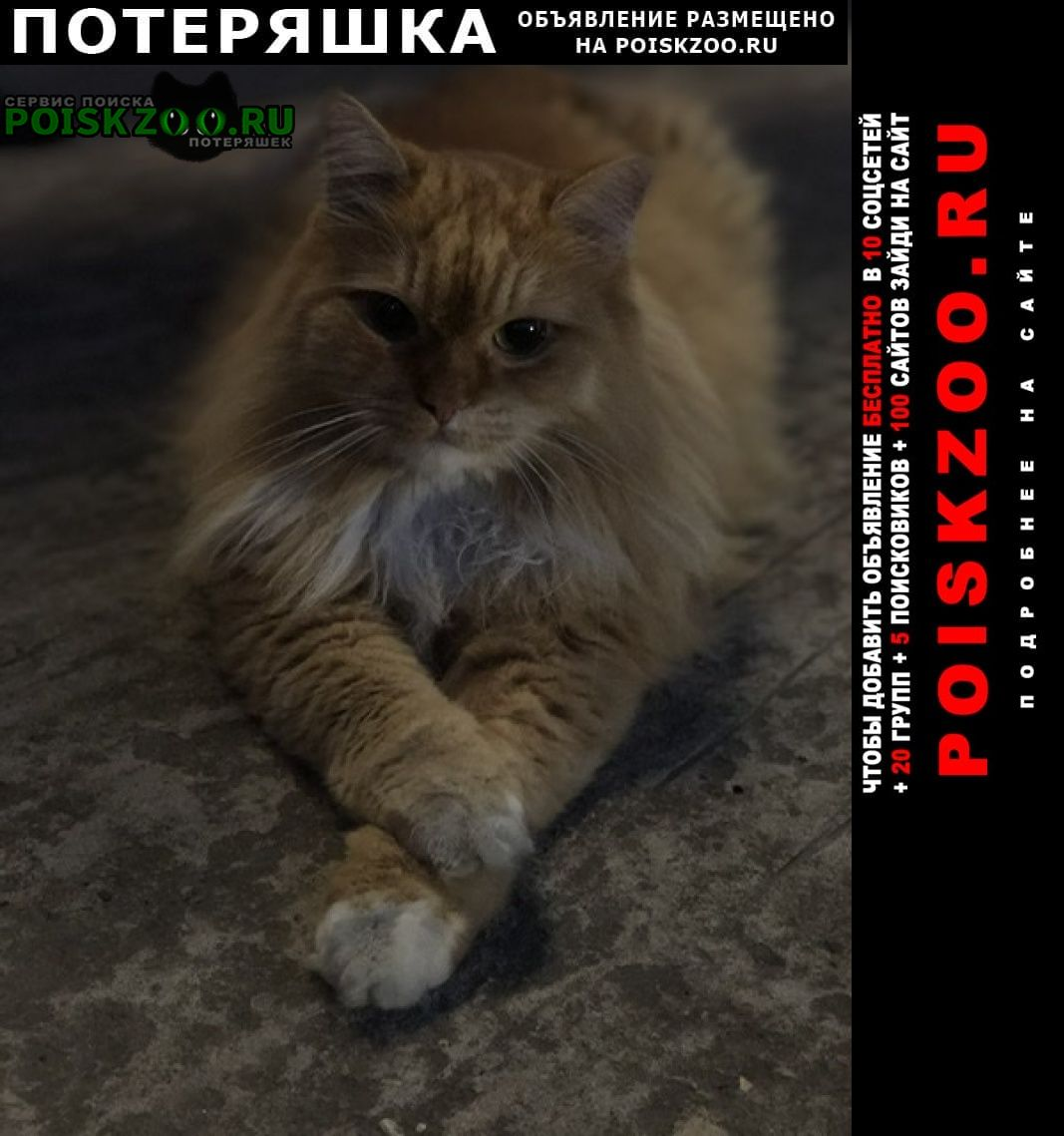 Москва Пропало домашнее животное кот