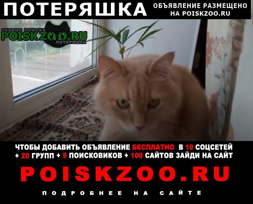 Саранск Пропало домашнее животное кот