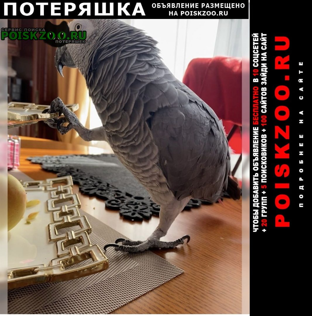 Сочи Пропал попугай