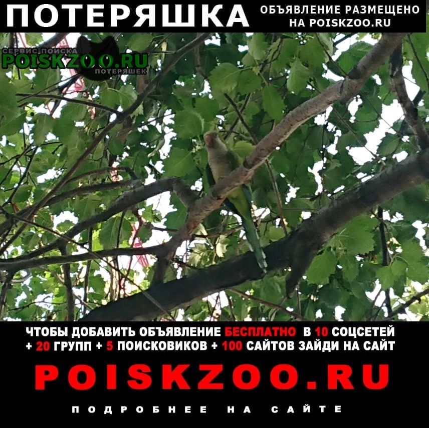 Пропал попугай монах квакер калита Москва