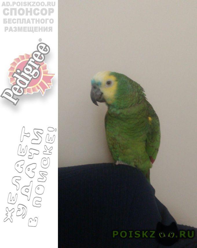 Пропал попугай большой зелёный . г.Гатчина