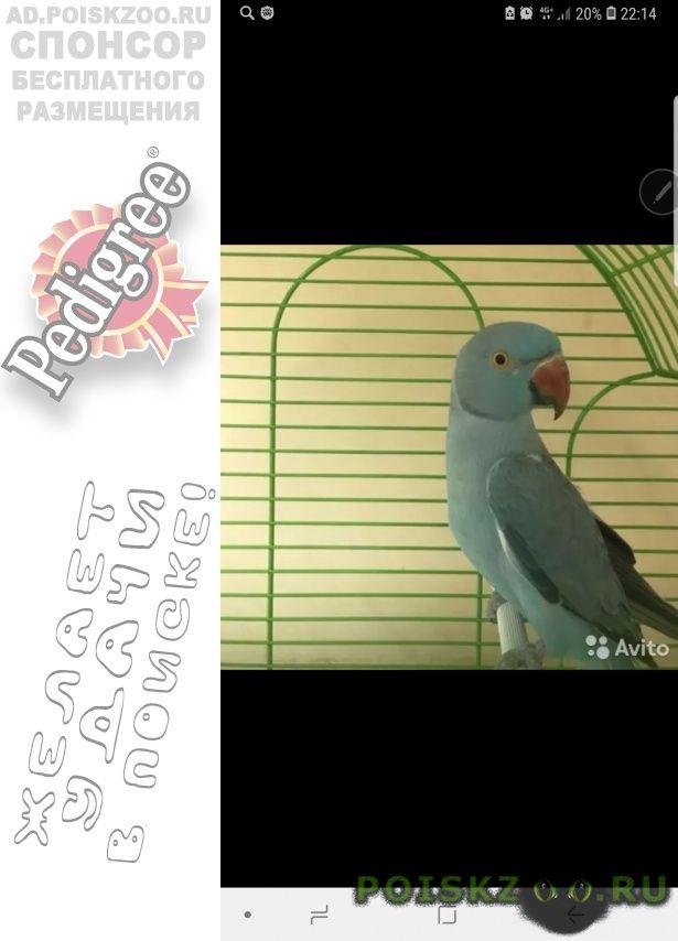Пропал попугай ожереловый г.Санкт-Петербург