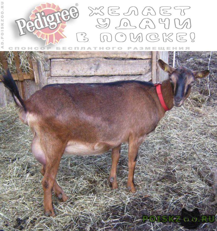 Пропало домашнее животное коза поселок кояшлы петровский г.Казань