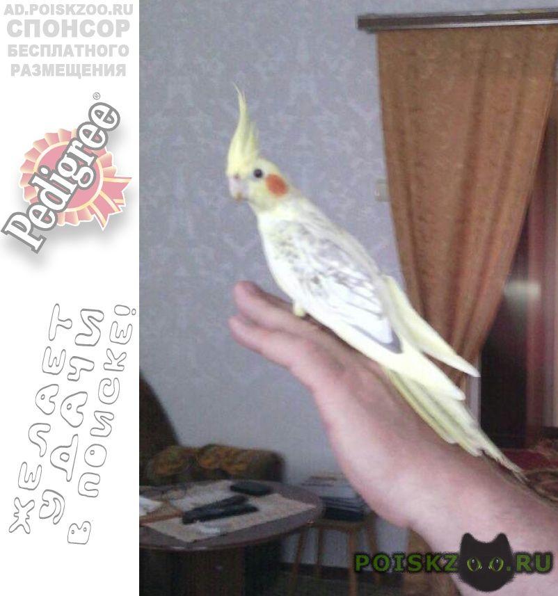 Пропало домашнее животное птичка г.Абинск