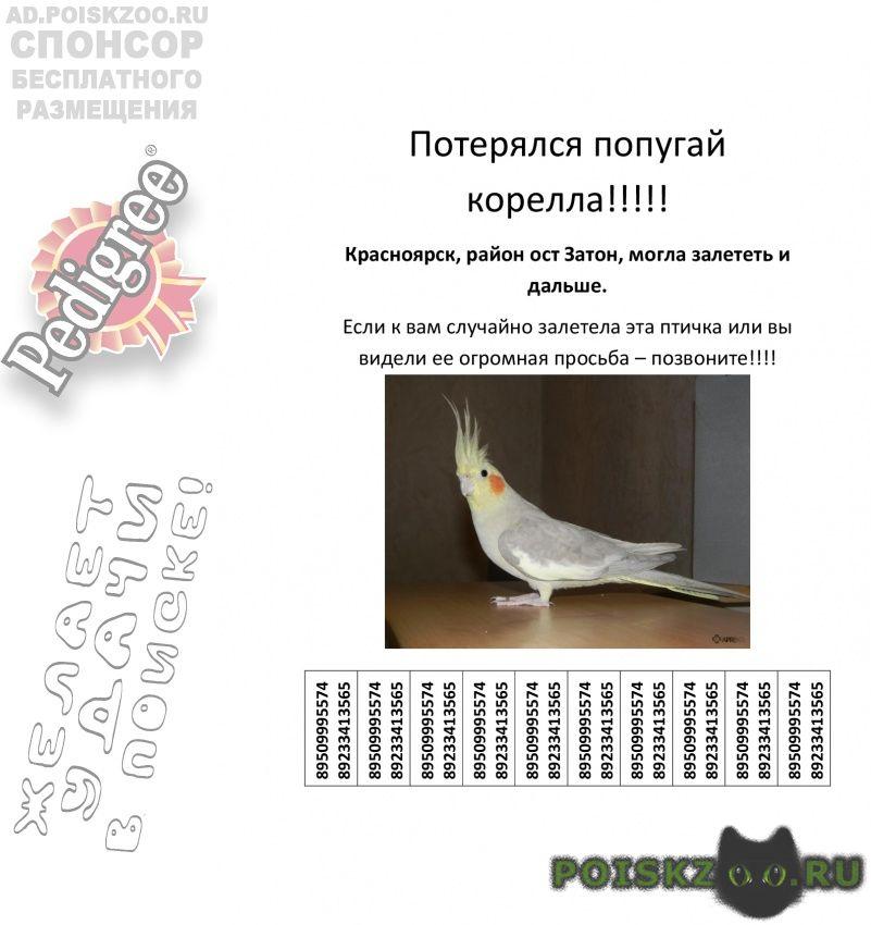 Пропал попугай г.Красноярск