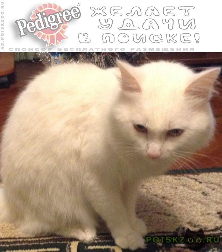 Пропало домашнее животное белый кот г.Адлер