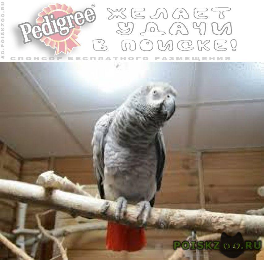 Пропал попугай жако г.Хабаровск
