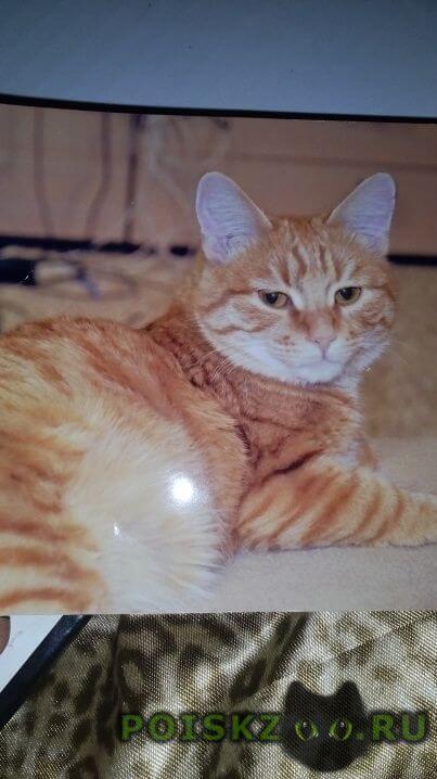 Пропало домашнее животное кот г.Пермь