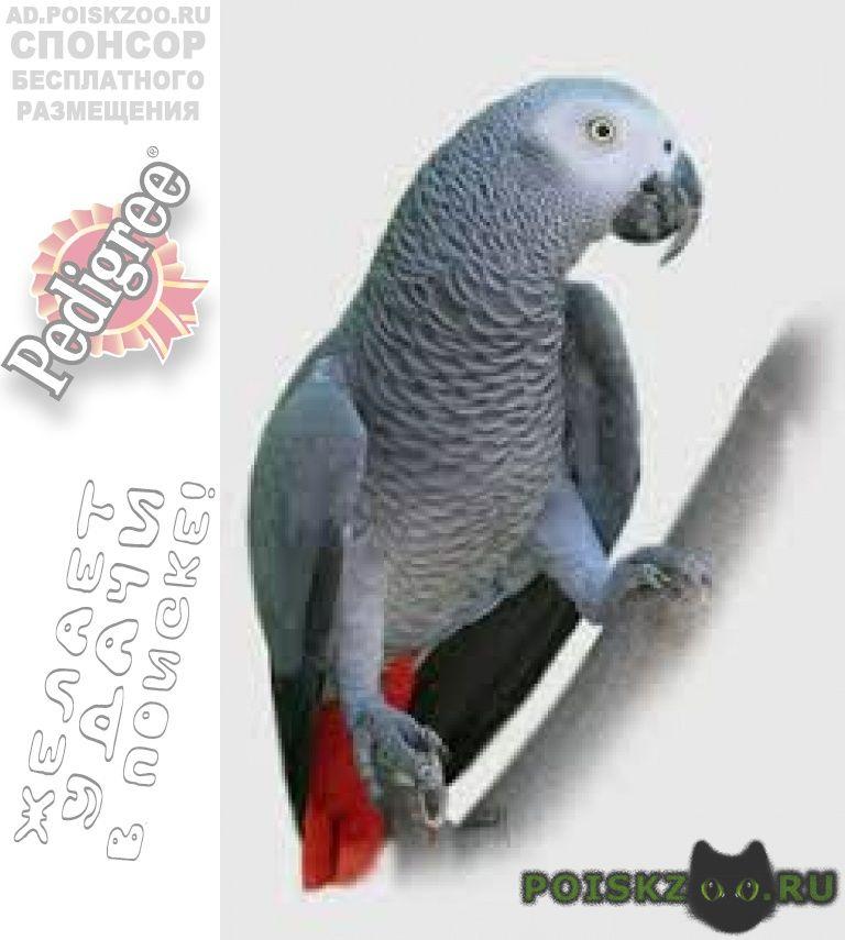 Пропал попугай улетел жако г.Чехов
