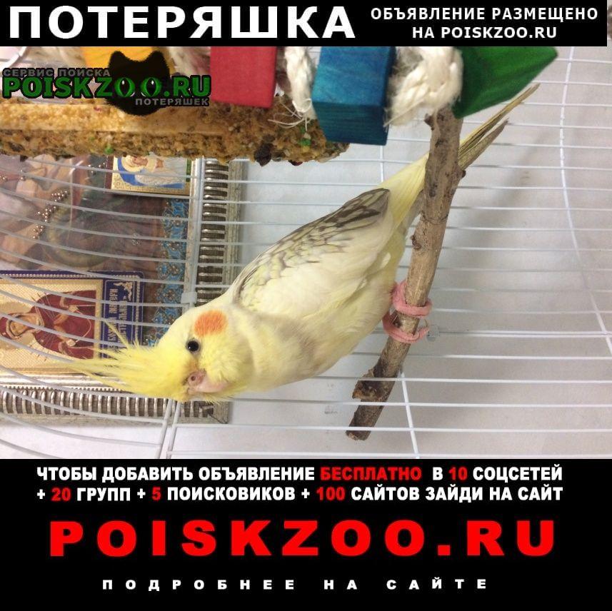 Ростов-на-Дону Пропал попугай капелла