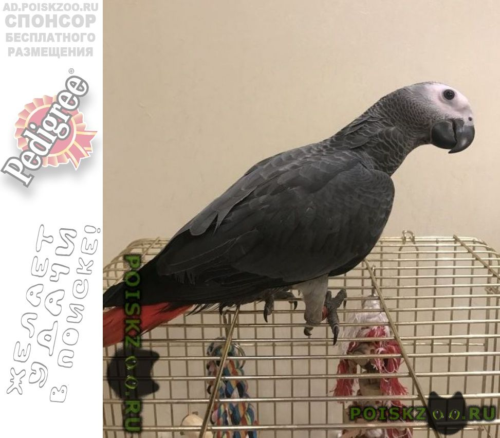 Пропал попугай жако, в районе леруа г.Саратов