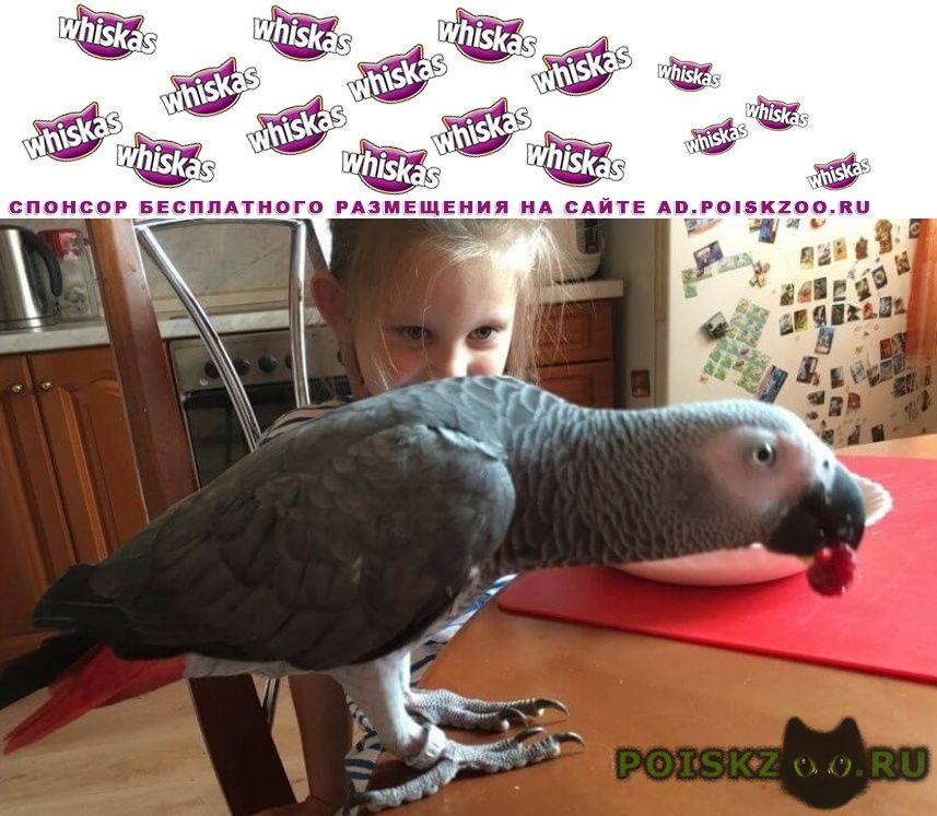 Пропал попугай жако г.Зеленоград