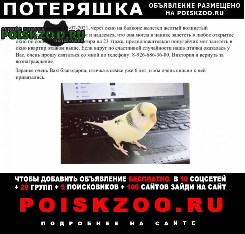 Пропал попугай волнистый, патрюша Москва