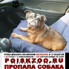 Пропала собака кобель г.Кремёнки