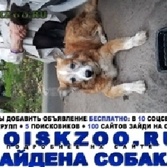 Найдена собака, алексеевский район свао г.Москва